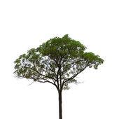 Yüksek tanımlı beyaz zemin üzerine ağaç — Stok fotoğraf
