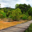 Wood bridge in forest — Stockfoto #36049685