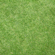 Green grass background — Stock Photo #37755673