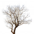 Tree on a white background in high definition — Stock Photo #37758249