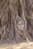 Buddha in The Tree Roots at Wat Mahathat, Ayutthaya, Thailand  — Stock Photo