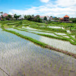bali counryside with rice terraces — Stock Photo #13067091