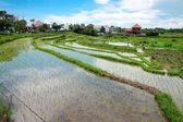 Bali counryside with rice terraces — Stock Photo