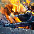 Firewood in the brazier — Stock Photo