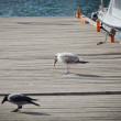 Close up of seagull — Stockfoto #15325473