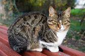 Closeup of cat — Stock Photo