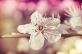 Spring blossom of flowers — Stock Photo