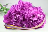 Closeup di spicchio viola bello — Foto Stock