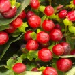 Cowberry — Stock Photo #22088897