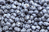 Blueberry — Foto de Stock