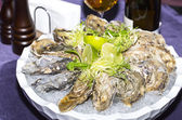 Oysters on ice in a dish — Stock Photo