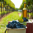 Harvest of vine — Stock Photo #13277620