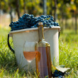 Stock Photo: Harvest of vine