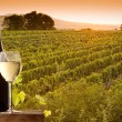 Evening view of the vineyards - Stock Photo