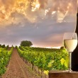 Stock Photo: Evening view of the vineyards