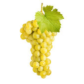 Fresh bunch of grapes of white wine — Stock Photo