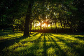 Sunlight green forest in summer time — Стоковое фото
