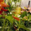 Portrait of man in flower shop arranging plant — Stock Video