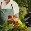 Man working in flower shop spraying plant and pots — Stockvideo
