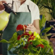 Man working in flower shop spraying plant and pots — Stock Video #32304765