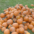 Stock Photo: Pumpkin Festival