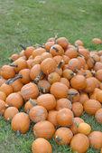Pumpkin Festival — Foto de Stock