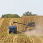 Iowa Cornfields — Stock Photo