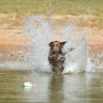Hunting Dog — Stock Photo #14043301