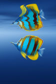 Fish on the sea waves. — Stock Photo