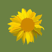 Sunflower vector illustration. — Vector de stock