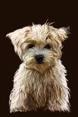 Dog. — Stock Photo