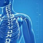 Постер, плакат: X Ray of human skeleton