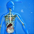 X-Ray of human — Stockfoto