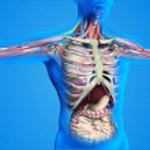 Постер, плакат: Internal anatomy of human organs