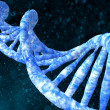 DNA molecules human — Stock Photo #35638427
