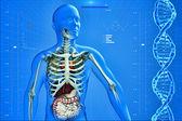 Radiographie de l'homme — Photo