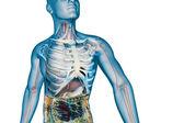 消化系统 — 图库照片