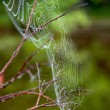 Stock Photo: Cobwebs on the branches.
