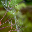 Cobwebs on the branches. — Stock Photo