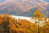 Golden Autumn Sakhalin. — Stock Photo