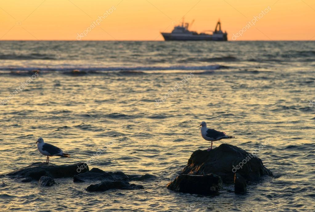Sea, seagulls, sunset.  Stock Photo #14072915
