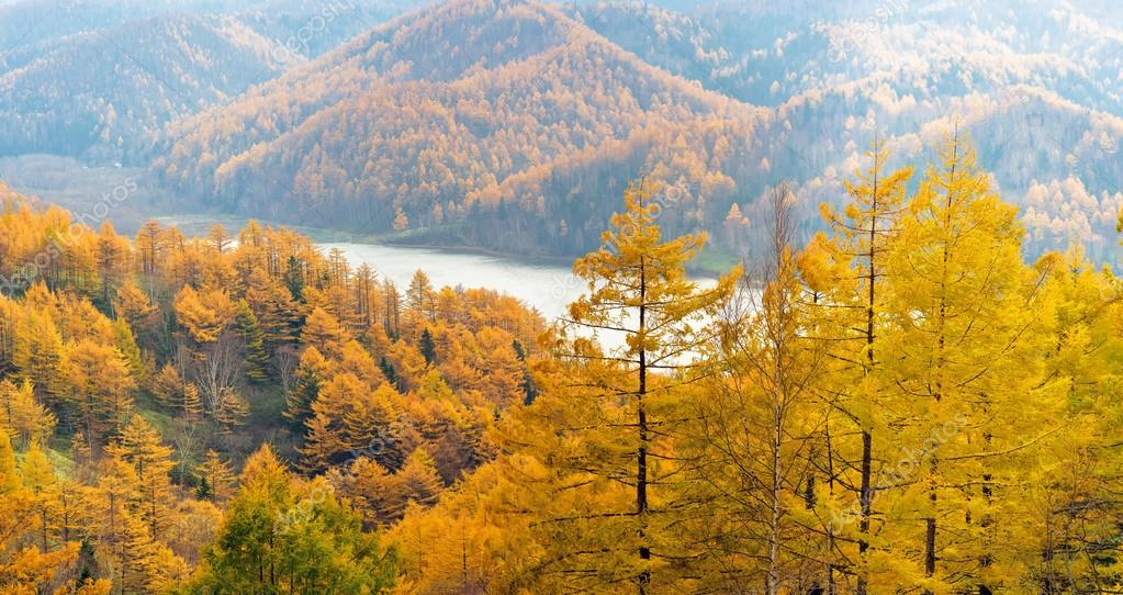 Golden Autumn Sakhalin. — Stock Photo #14073382