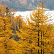 Golden Autumn Sakhalin. — Stock Photo #14107602