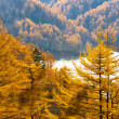 Golden Autumn Sakhalin. — Stock Photo