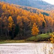 Stock Photo: Golden Autumn Sakhalin.
