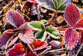 The first frosts. — Stock Photo