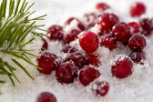 Cranberries in the snow. — Stock Photo