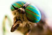 Gadfly eye close-up. — Stock Photo
