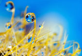 Drops. Reflected in the drops. — Stock Photo