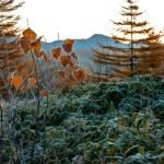 Golden Autumn Sakhalin. — Stock Photo #35083703